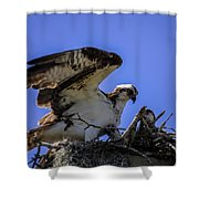 Osprey In The Nest Shower Curtain