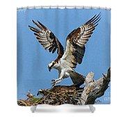 Osprey Mating Shower Curtain