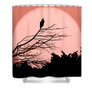 Osprey Moon Shower Curtain
