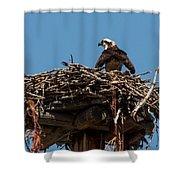 Osprey Nest Shower Curtain