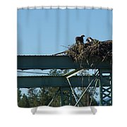 Osprey Nest With Mom And Chicks Shower Curtain