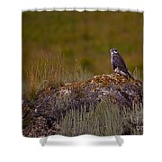 Osprey On A Rock   #7626 Shower Curtain