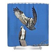 Osprey Pair Love In The Air Shower Curtain