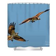 Osprey Pair Shower Curtain