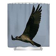 Osprey Reach  Shower Curtain