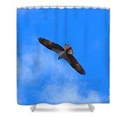 Osprey Soars Shower Curtain
