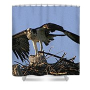 Osprey Warning Shower Curtain