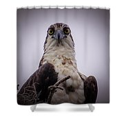 Osprey Watching I Shower Curtain