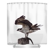 Osprey Wit A Trout Shower Curtain