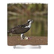Osprey With Breakfast Shower Curtain