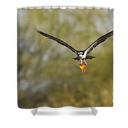Osprey With Goldfish Shower Curtain