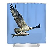 Osprey With Mullet Shower Curtain