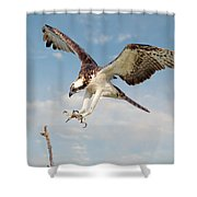 Osprey With Talons Extended Shower Curtain