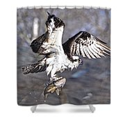 Osprey With Walleye Fish Shower Curtain