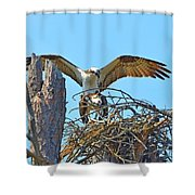Ospreys Copulating In New Nest2 Shower Curtain