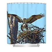 Ospreys Copulating In New Nest3 Shower Curtain