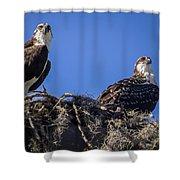 Ospreys In The Nest Shower Curtain