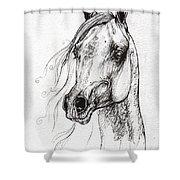 Ostragon Polish Arabian Horse 3 Shower Curtain