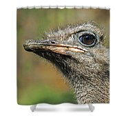 Ostrich 4 Shower Curtain