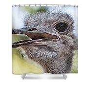 Ostrich Bokeh V2 Shower Curtain