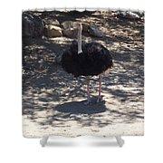 Ostrich Dance Shower Curtain