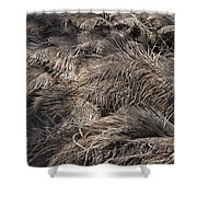 Ostrich Feathers  Shower Curtain
