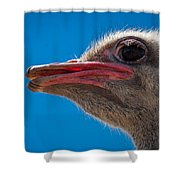 Ostrich Profile Shower Curtain