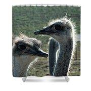 Ostrich Round-up Shower Curtain