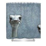 Ostriches Shower Curtain