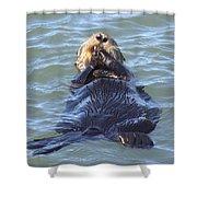 Otter 2 Shower Curtain