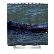 Otter 3 Shower Curtain