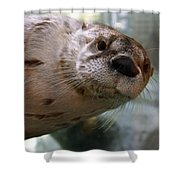 Otter Be Lookin' At You Kid Shower Curtain by John Haldane
