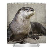 Otter North American  Shower Curtain