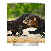 Otters Crossing The Road  Shower Curtain