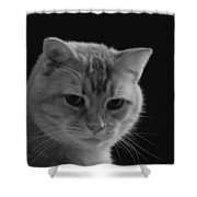Our Lion In Black And White Shower Curtain