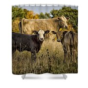 Out For A Graze Shower Curtain