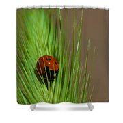Out For A Snack Shower Curtain
