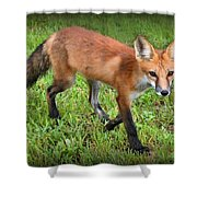 Out For A Walk Shower Curtain