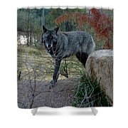 Out Of Africa Black Wolf Shower Curtain