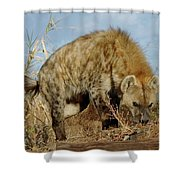 Out Of Africa Hyena 1 Shower Curtain