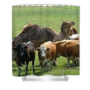 Out Of Place Shower Curtain
