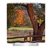 Out To Pasture Shower Curtain by Joann Vitali