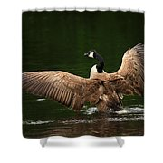 Outstretched Wings Shower Curtain