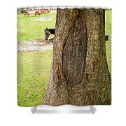 Oval Tree Art Shower Curtain