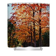 Over The Hill And Through The Trees Shower Curtain
