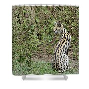 Over Theshoulder Shower Curtain
