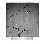 Over Tree Tops Shower Curtain