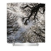 Overhead Trees In Exmoor, United Kingdom Shower Curtain