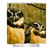 Owl I Shower Curtain