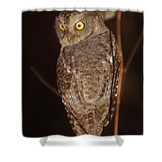 owl of Madagascar Shower Curtain